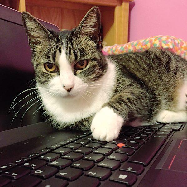 high-tech-cats-pix-Sarah