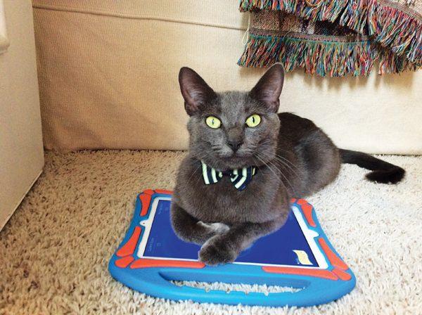 high-tech-cats-pix-Winston