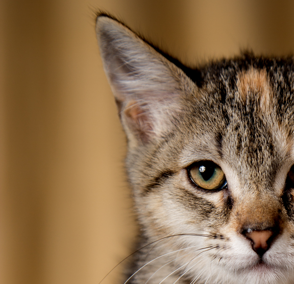 Mind And Body: What's Going On In Your Cat's Brain?