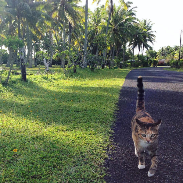 tropicat-on-land