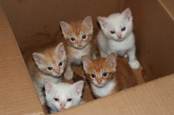 The Kitten Squad is taking in the wonders of their first Boxing Day.