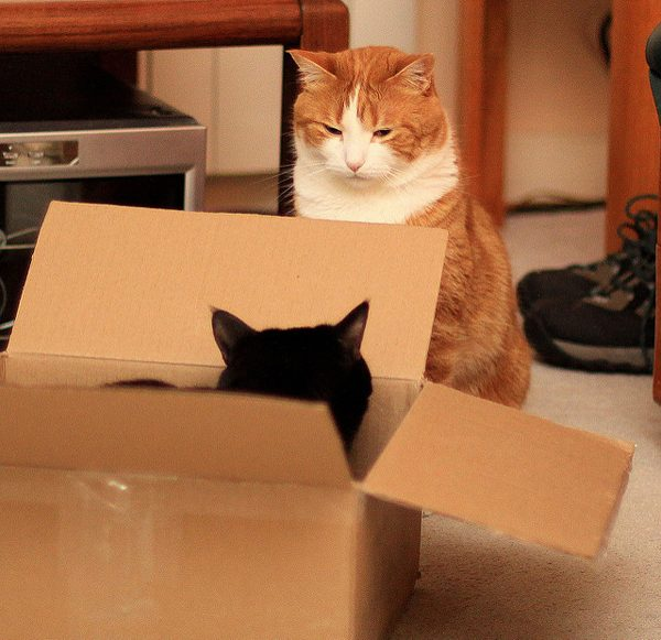 Sometimes boxes and families don't mix.