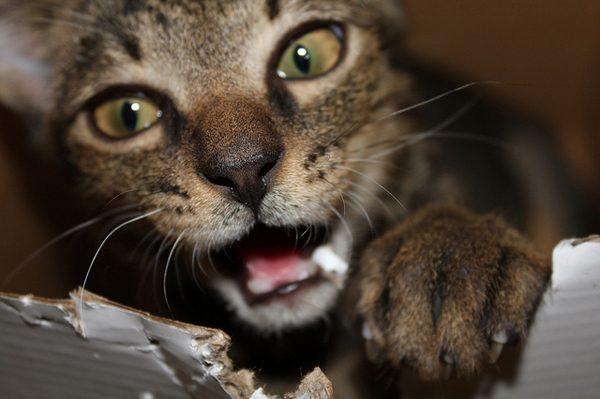 Bernice sinks her teeth into Boxing Day.