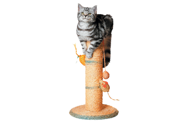 A gray tabby cat sitting up on a scratching post.