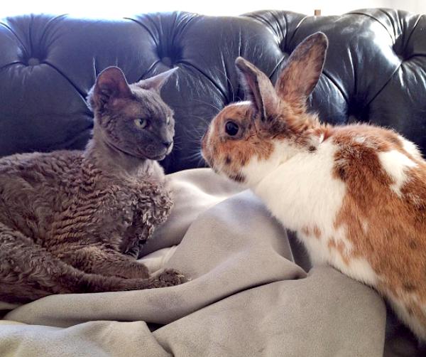 Romey-Rabbit