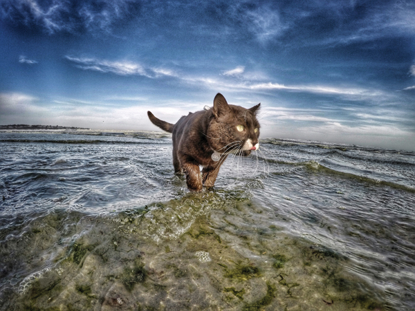 adventure-cats-Burma