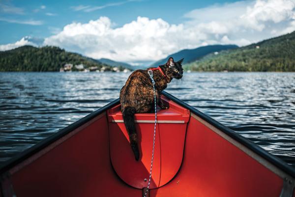 adventure-cats-Eevee