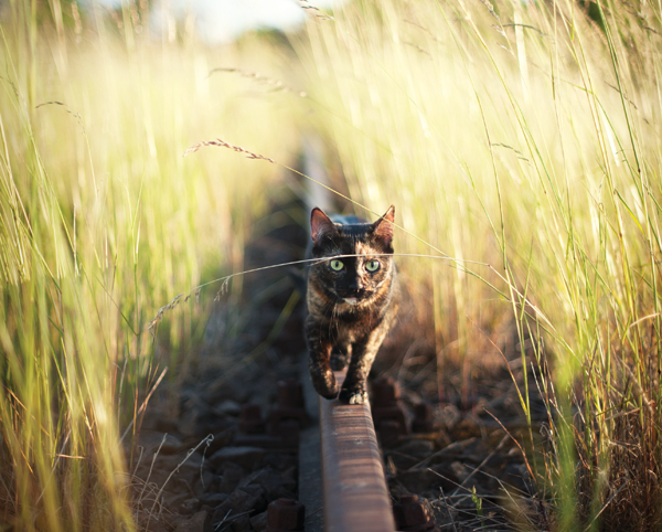 adventure-cats-Kate