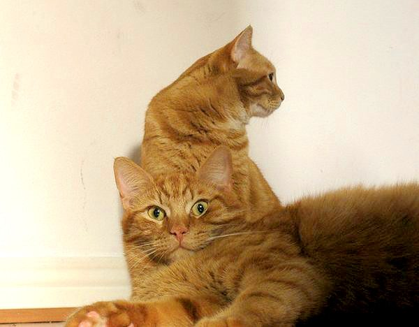 cats-couples-therapy-4