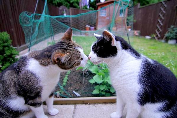 cats-couples-therapy-5