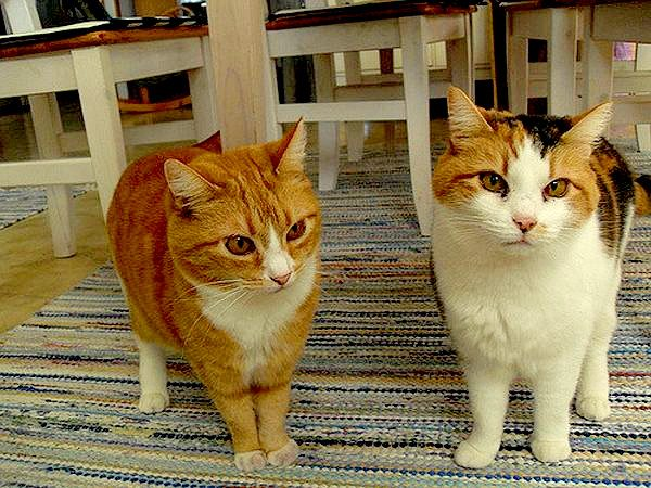 cats-couples-therapy-6