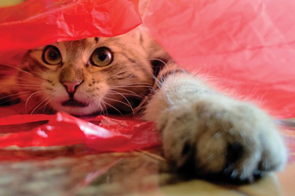 "Cute funny cat in a plastic red bag.. seeming to think ""Please, help me!"" his eyes are so expressive!"