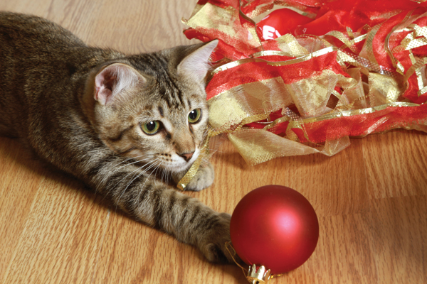feline-holiday-freakout-ornament