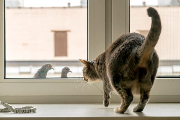 Although our household cats don't have to hunt to survive, they still are predators. Photo by Shutterstock