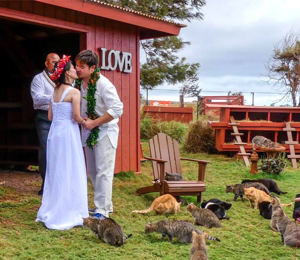 lanai-cat-sanctuary-02-couple-wedding