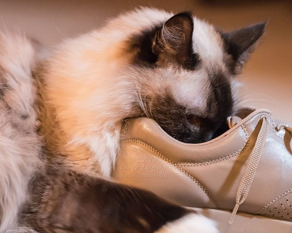 """""""I know what to do with these shoes."""""""
