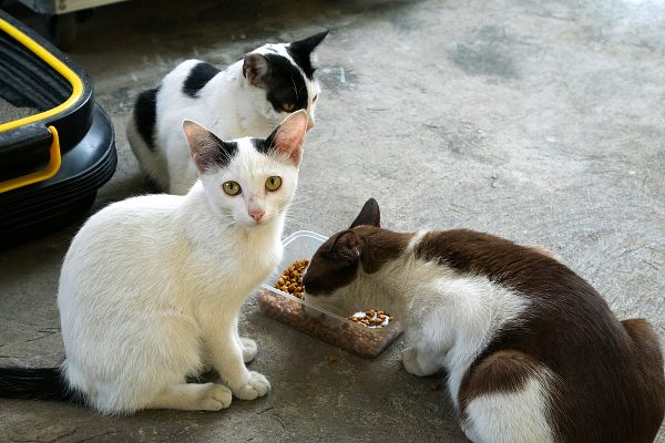 Cats don't want to share their food—each cat needs her own food bowl. Photo by Shutterstock