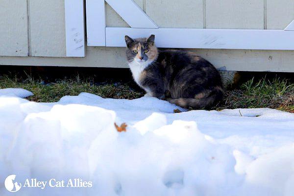 winter-tips-outdoor-cats-02