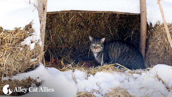 winter-tips-outdoor-cats-03