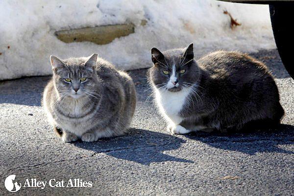 winter-tips-outdoor-cats-05