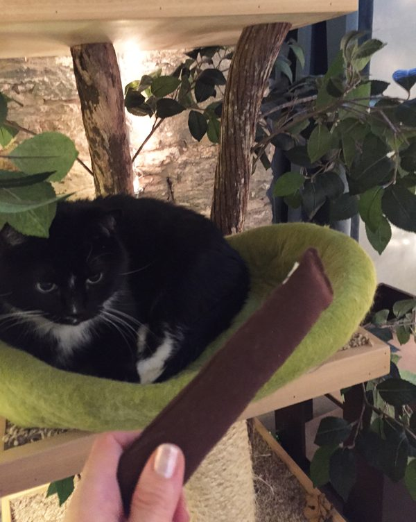 cosmo-catnip-cigar-cat-toy