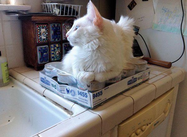 cat-people-problems-destroy-Vito