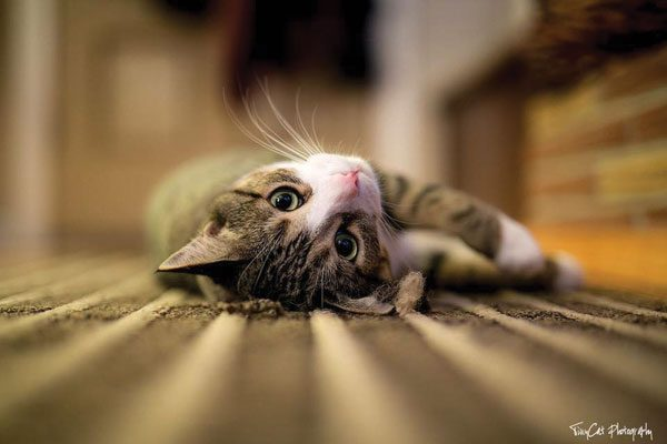 cat-people-problems-scaredy-Kobe