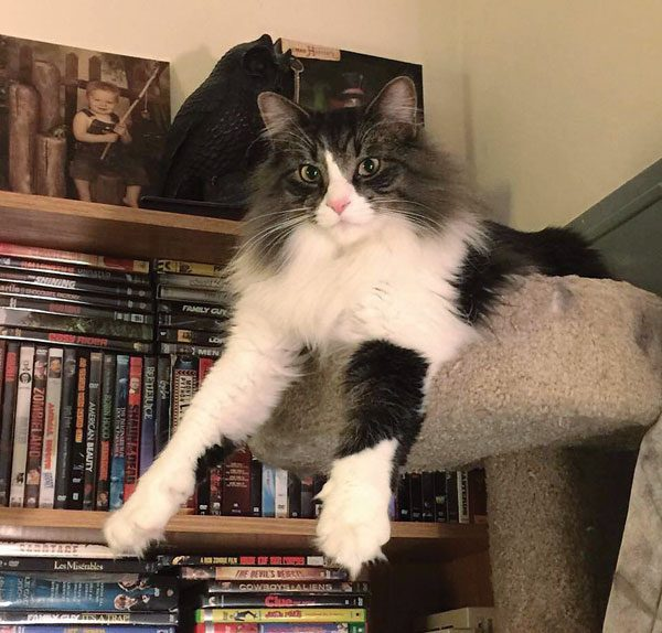 cat-people-problems-scaredy-Rocky
