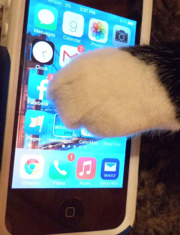 """""""I need a notification ... about ear rubs."""""""