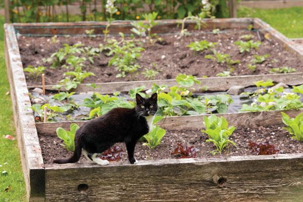 outdoor-cats-garden-26646545
