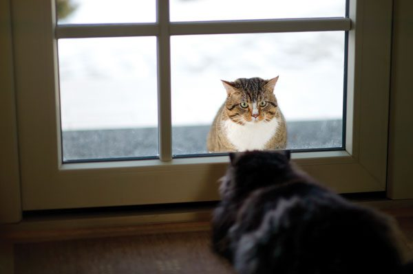 outdoor-cats-glass-door-175479338