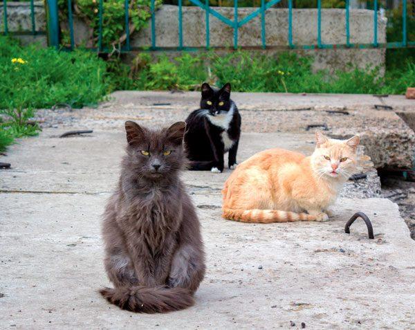 outdoor-cats-sidewalk-276672086