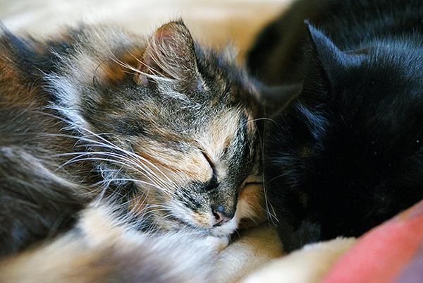 A black cat and a tortie snuggle.