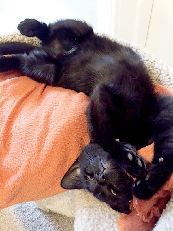 word-street-black-cat-Sammy