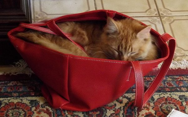 Adorableness? It's in the bag.