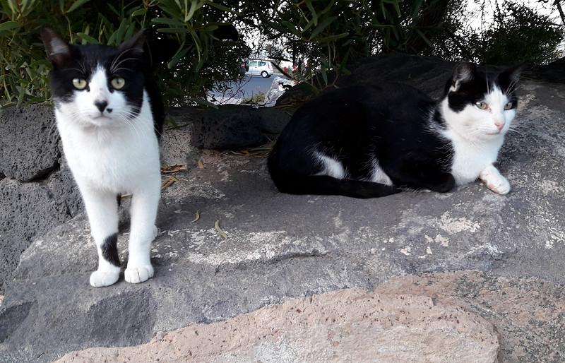 2blackandwhite-cats