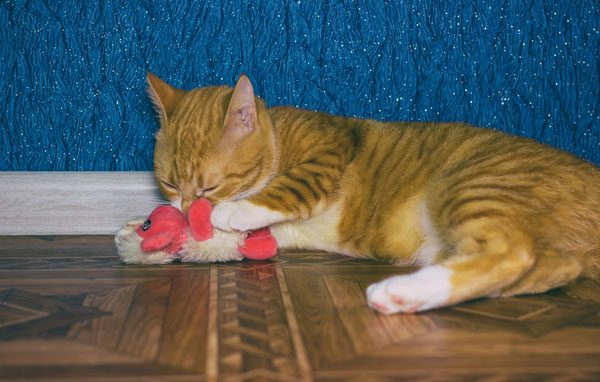 Cat playing with a toy.