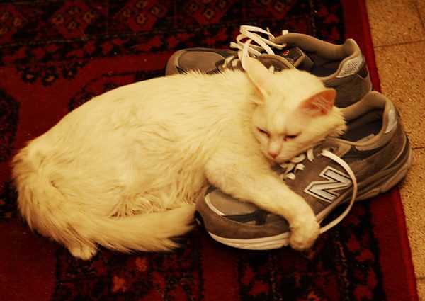 This cat's a shoo-in for the 'Cutest Cat Hugging a Shoe' award.