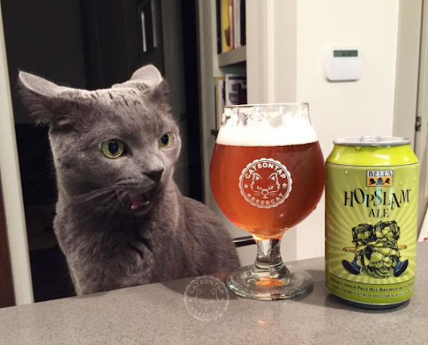 Rosie And Milly Are 2 Rescue Cats Who Go Great With Beer Catster