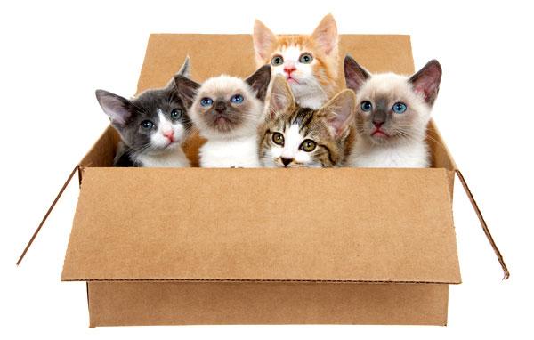 box-of-kittens-508871806