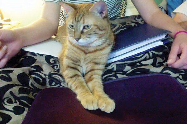 cat-people-problems-Finnigan