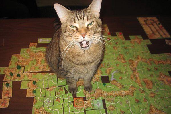 cat-people-problems-MacClean