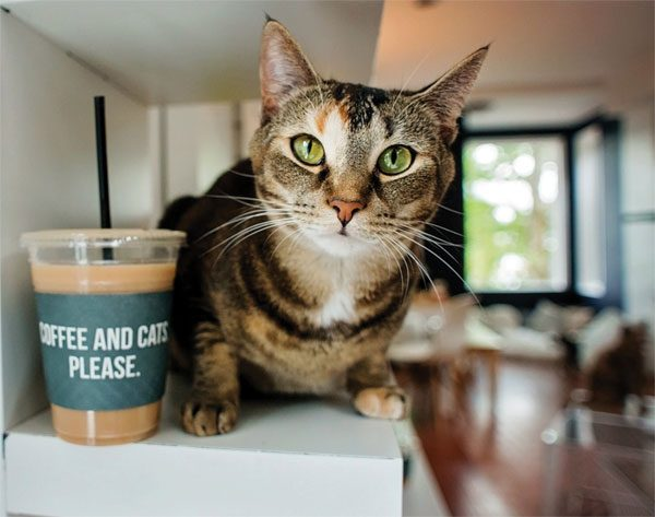 crumbs+whiskers-cat+coffee