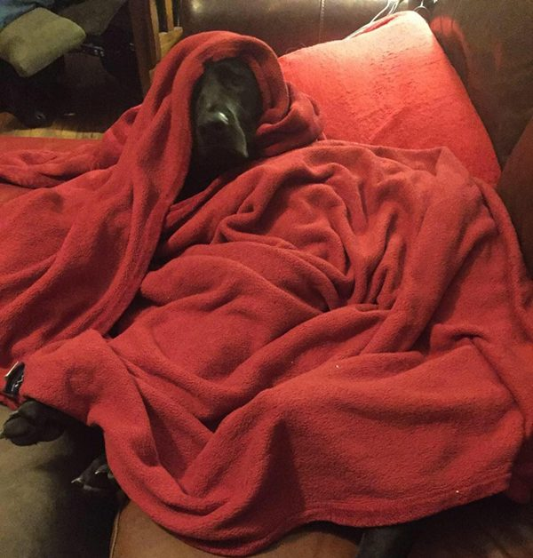 Earl: thief of naps.