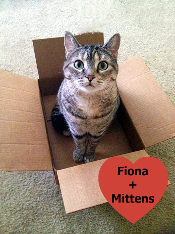 fiona-cat-box