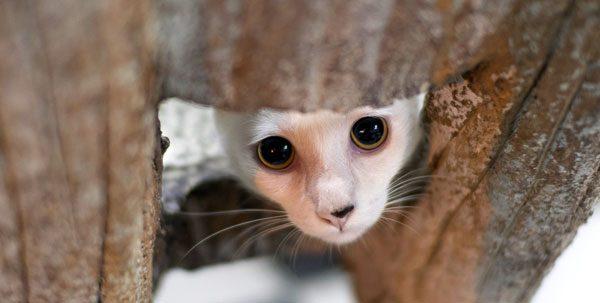 Stressed cat hiding.