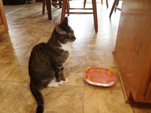 phoebe-empty-food-dish