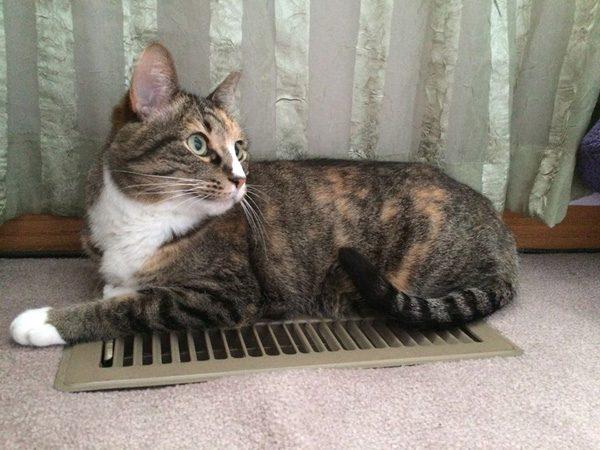 phoebe-cat-heating-vent-posing