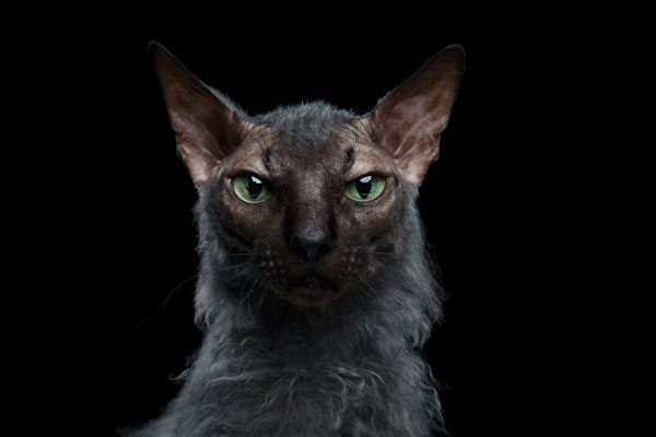 werewolf-cat-03-410576149