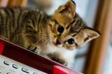 Do Cats Like Music?